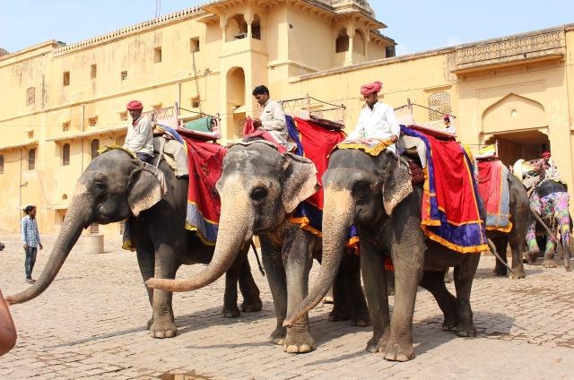 2.1413240639.elephants-make-their-arrival