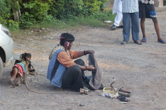 2.1413240676.snake-charmer-with-performing-monkeys